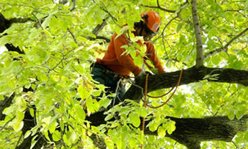 Tree Trimming in Boca Raton FL Tree Trimming Services in Boca Raton FL Tree Trimming Professionals in Boca Raton FL Tree Services in Boca Raton FL Tree Trimming Estimates in Boca Raton FL Tree Trimming Quotes in Boca Raton FL