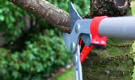 Tree Pruning Services in Boca Raton FL