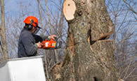 Tree Removal in Boca Raton FL